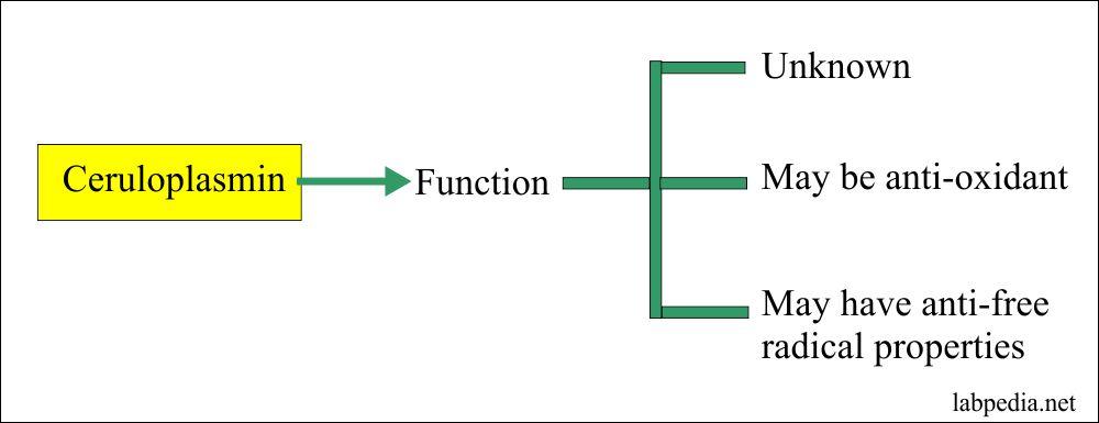 Ceruloplasmin functions