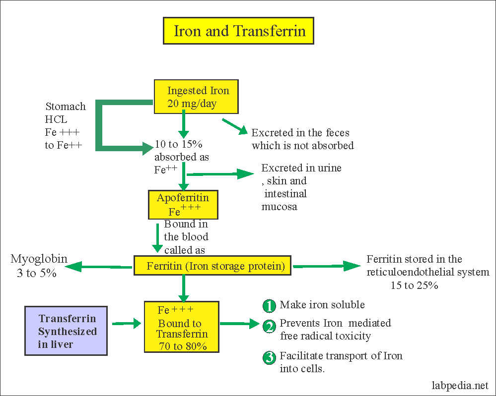 transferinn synthesis