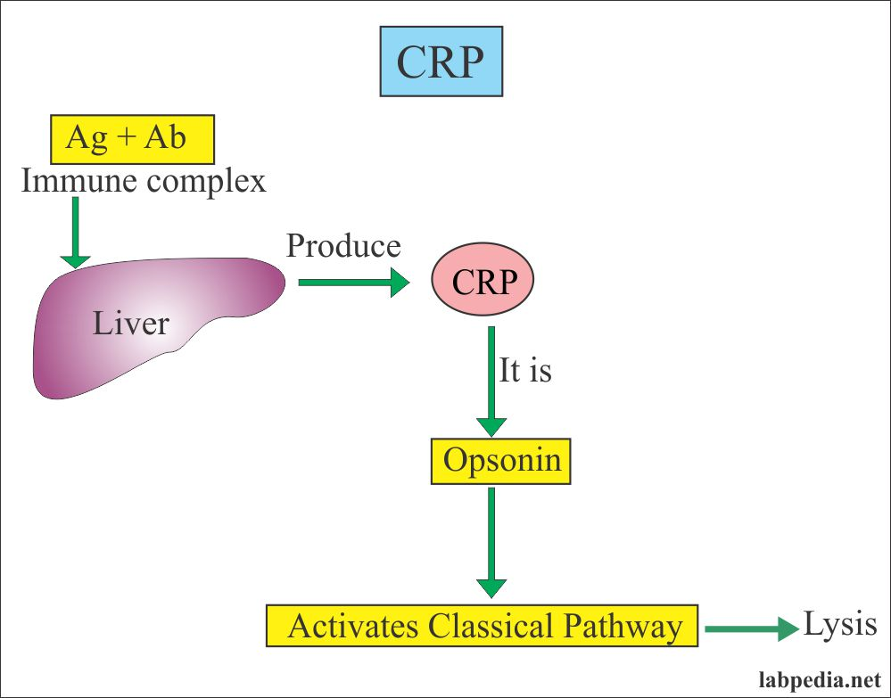 Acute Phase Protein – Part 6 – C-Reactive Protein (CRP), High-Sensitivity C-Reactive Protein (hs-CRP)