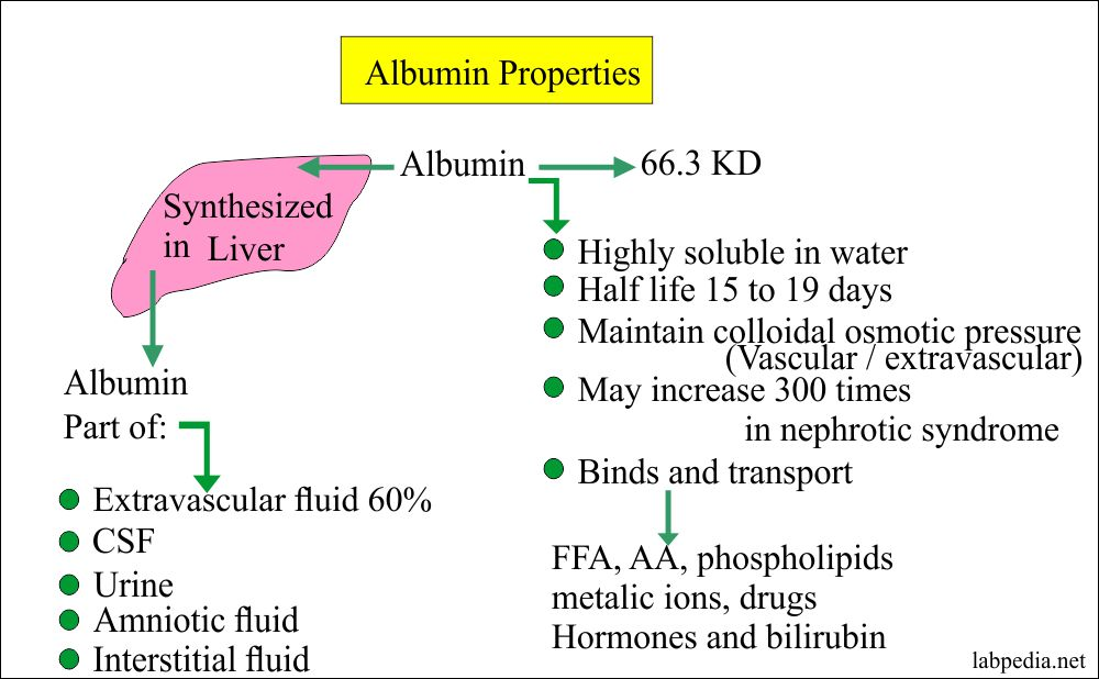Albumin distribution and properties