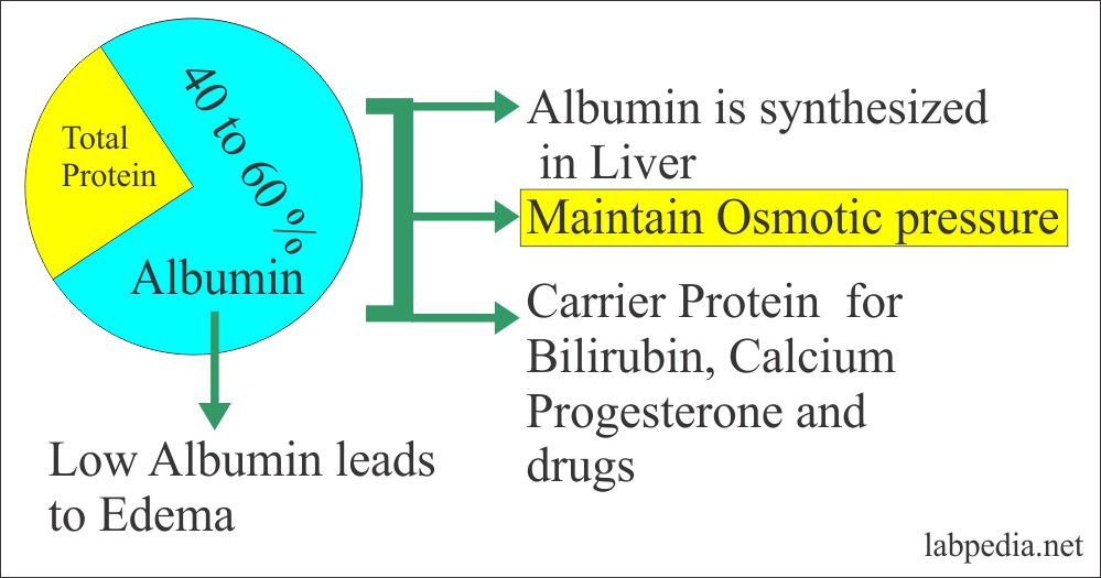 Acute Phase Protein – Part 7 – Albumin and Prealbumin