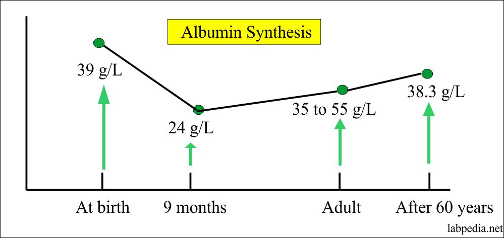 albumin synthesis