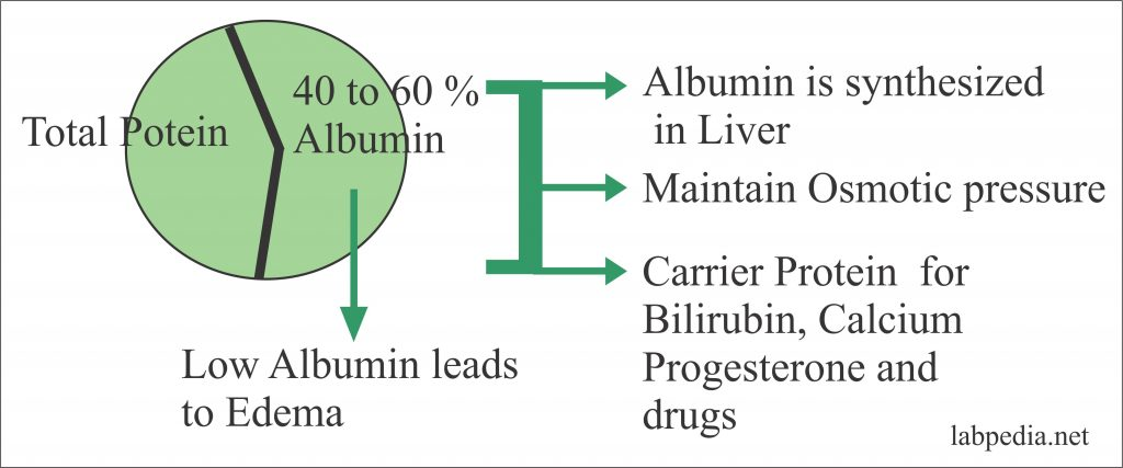 Albumin and protein ratio