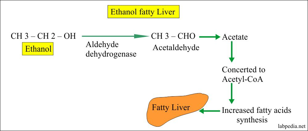 Alcohol Content in Blood, Breath, Saliva and Urine (Ethyl alcohol, Ethanol)