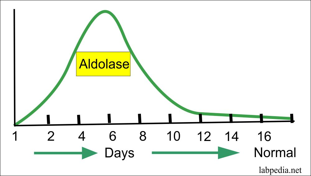 Aldolase level