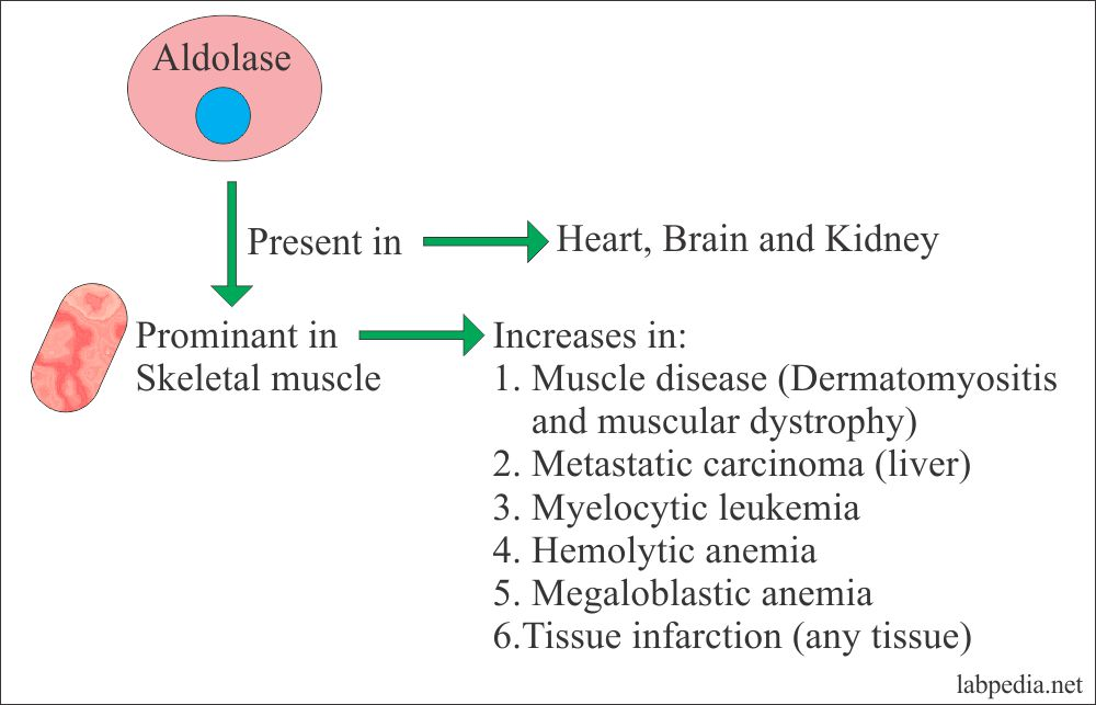 Causes of Aldolase increase