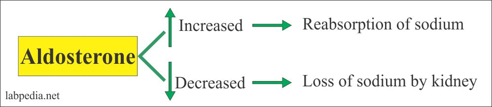 Aldosterone effect for sodium absorption