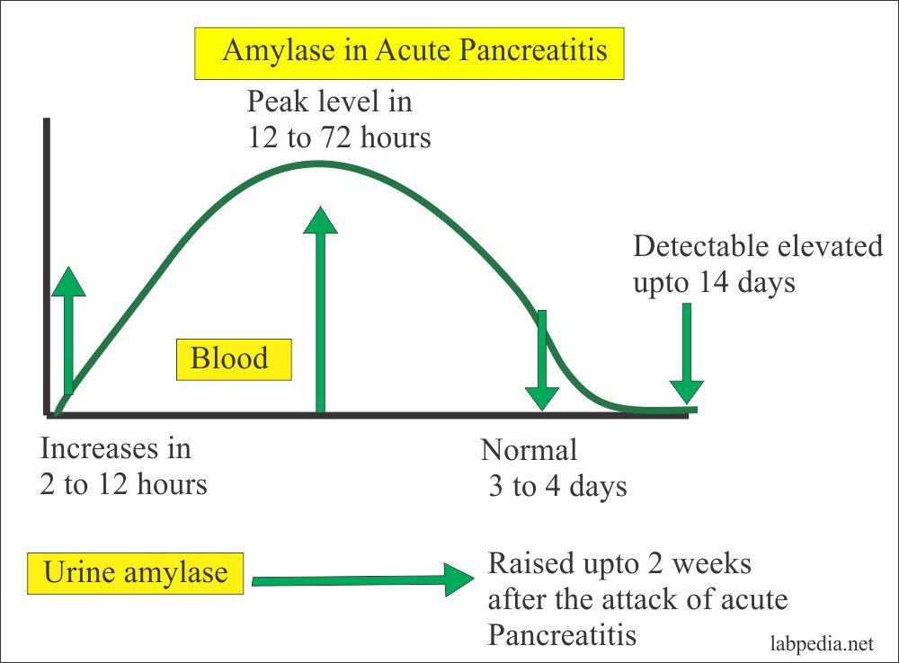 Amylase in the pancreatitis
