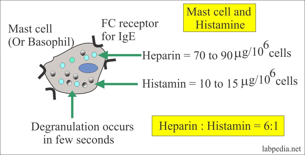 Mast cell and histamine release