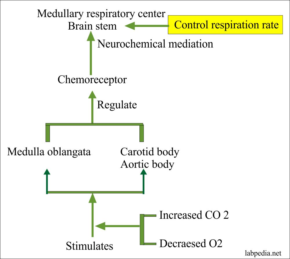 Control of respiration rate