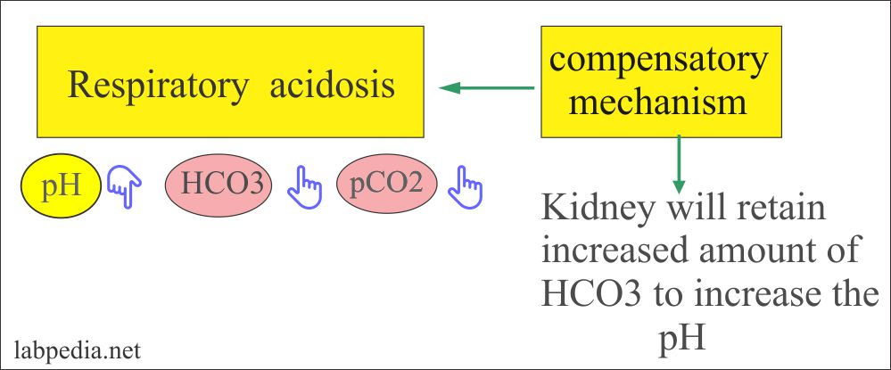 Respiratory acidosis and compensatory mechanism