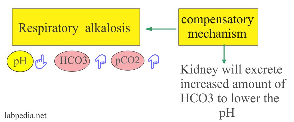 Respiratory alkalosis and compensatory mechanism