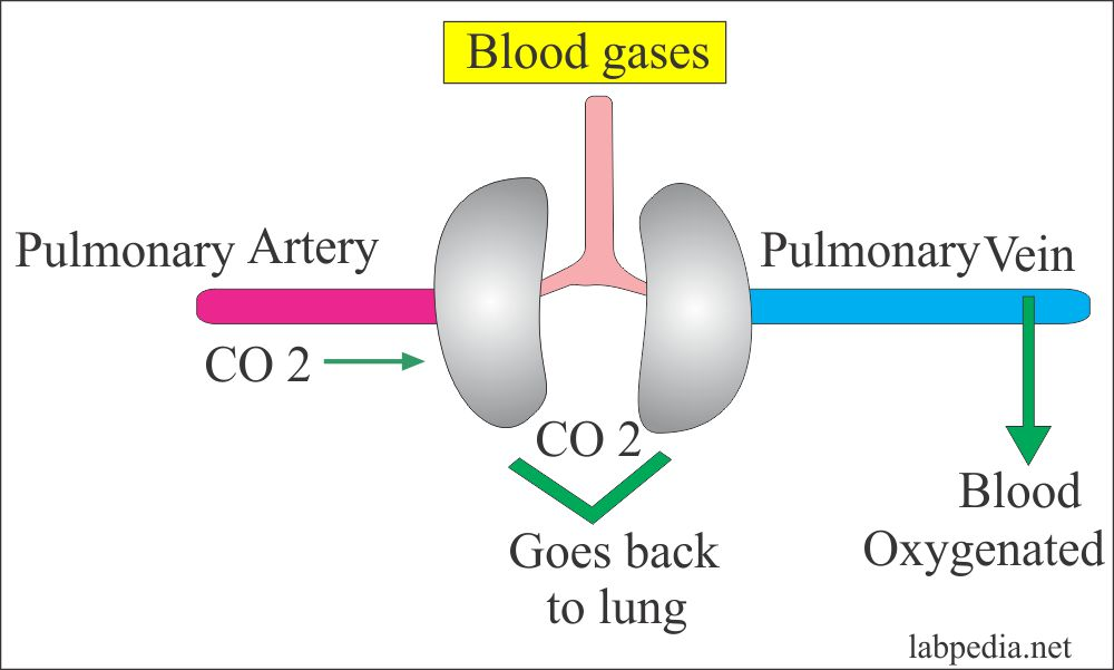 Blood gases control