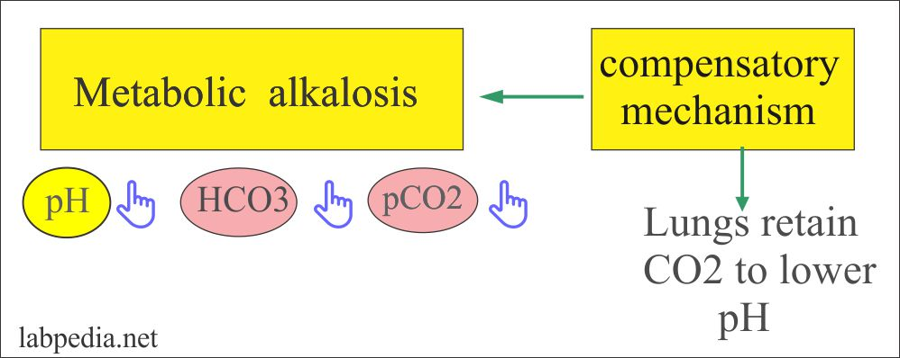 Metabolic alkalosis and compensatory mechanism
