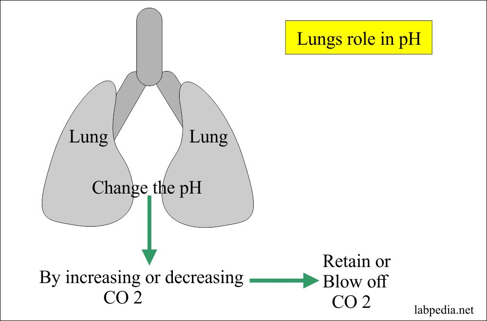 Lung role in control of pH