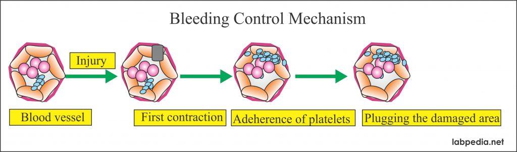 Bleeding control mechanism
