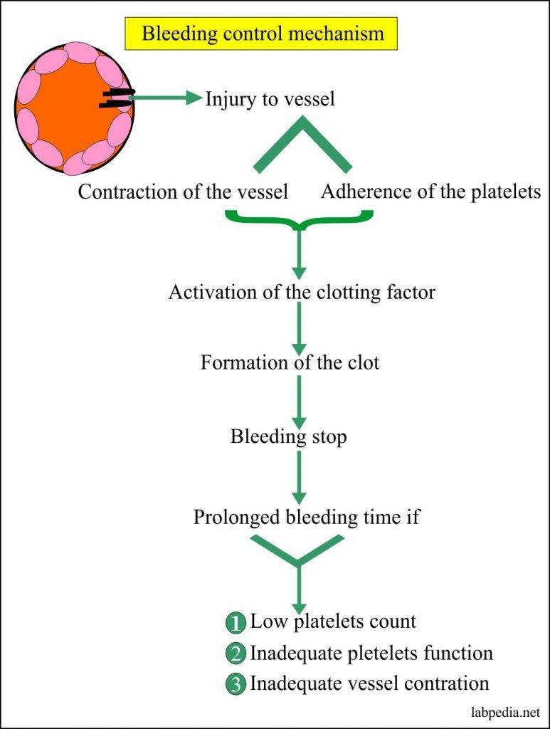 Bleeding control mechanism in detail