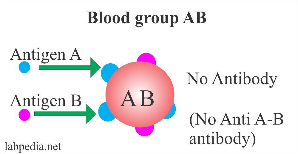 Blood group AB