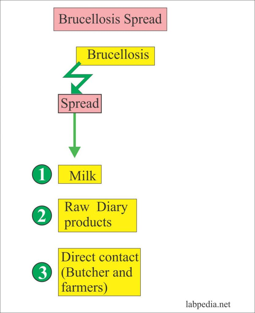 Brucellosis mode of spread