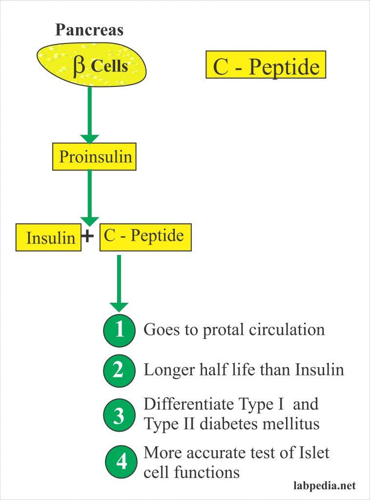 C-Peptide (Insulin C-Peptide, Proinsulin C-Peptide)