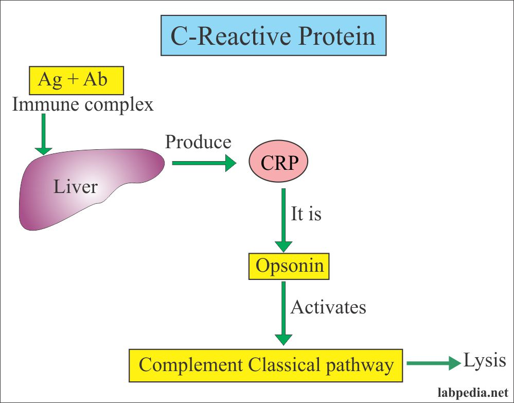 C-Reactive Protein (CRP), High-sensitivity CRP (hs-CRP)