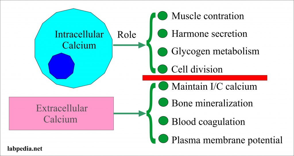 Calcium in the extracellular compartment