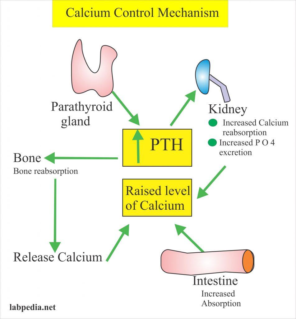 Calcium – Calcium Total ,  Serum Calcium   Part 1