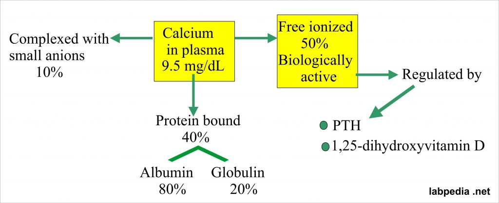 Calcium distribution in the blood