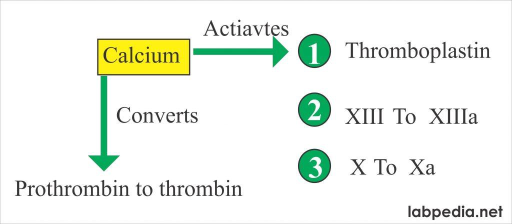 Calcium activates coagulation factor