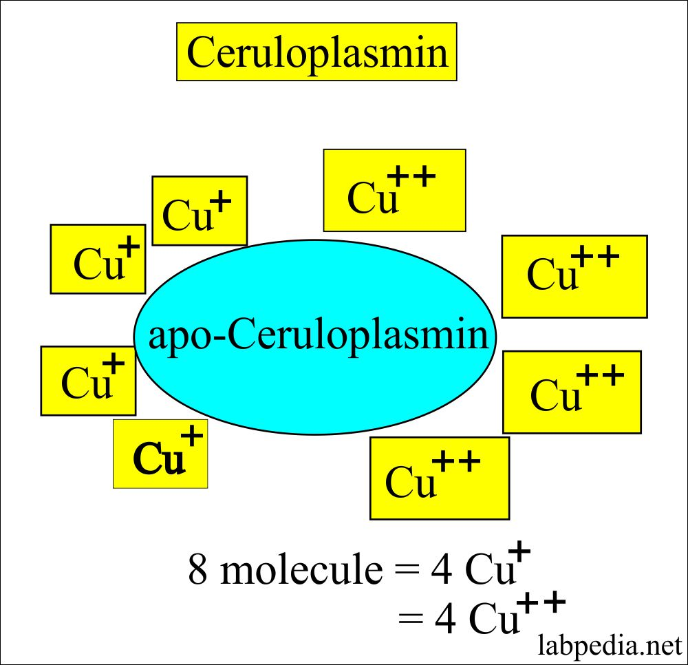 Ceruloplasmin,  Copper Toxicity