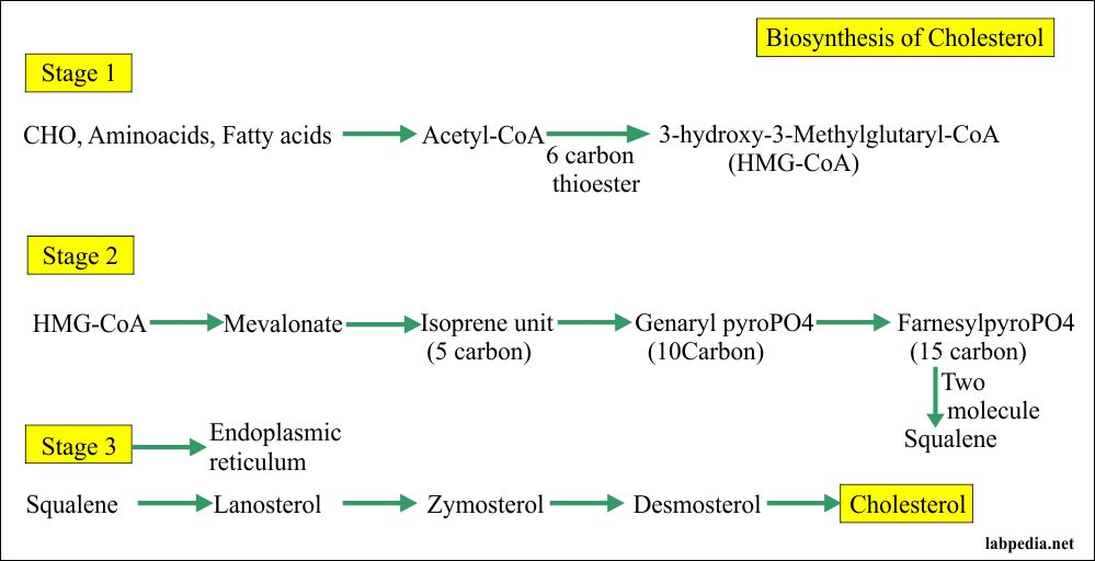 Biosynthesis of cholesterol