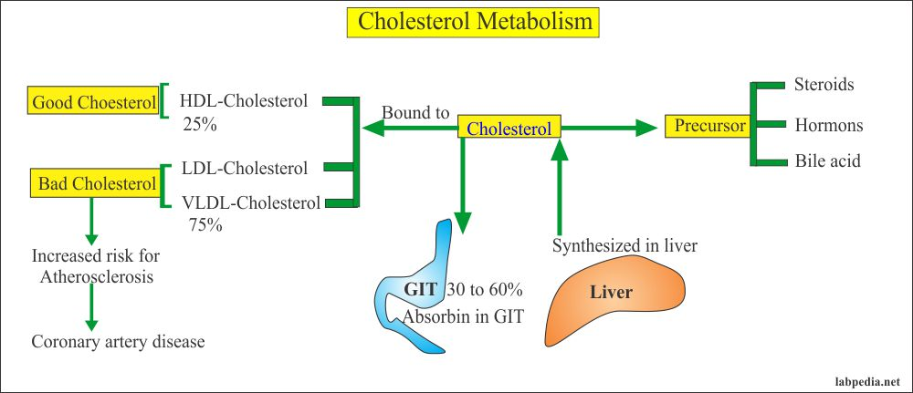Cholesterol absorption and metabolism