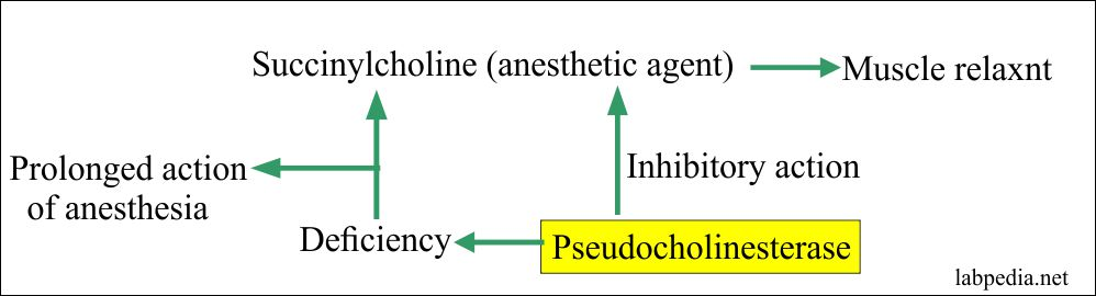 Cholinesterase serum