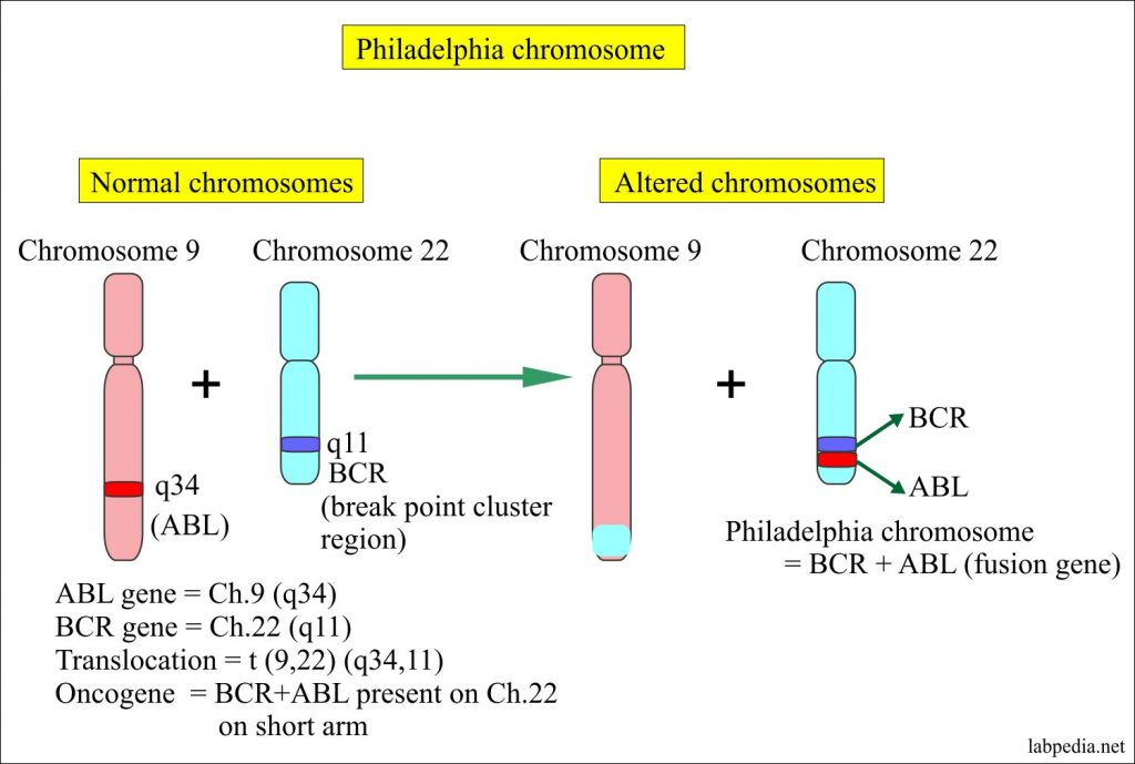 Chromosome studies, Blood Chromosome Analysis, Cytogenetics, Chromosome Karyotyping