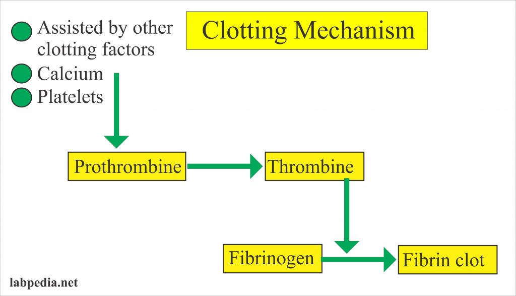 Clotting mechanism