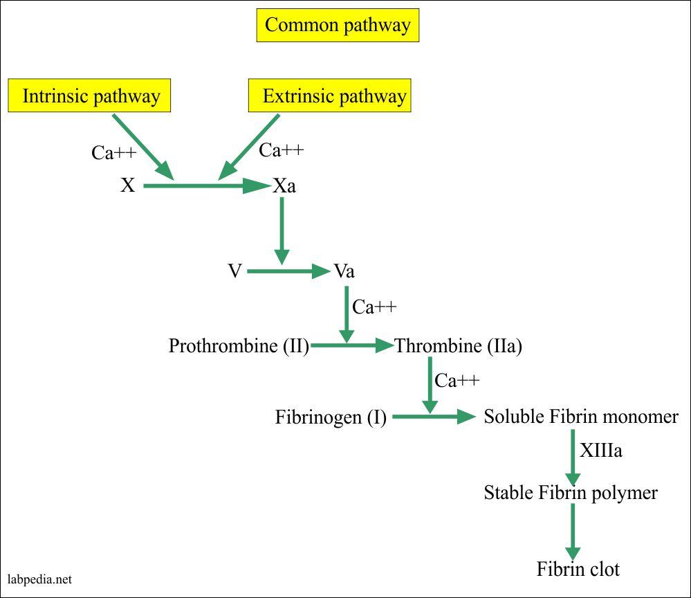Common pathway cascade