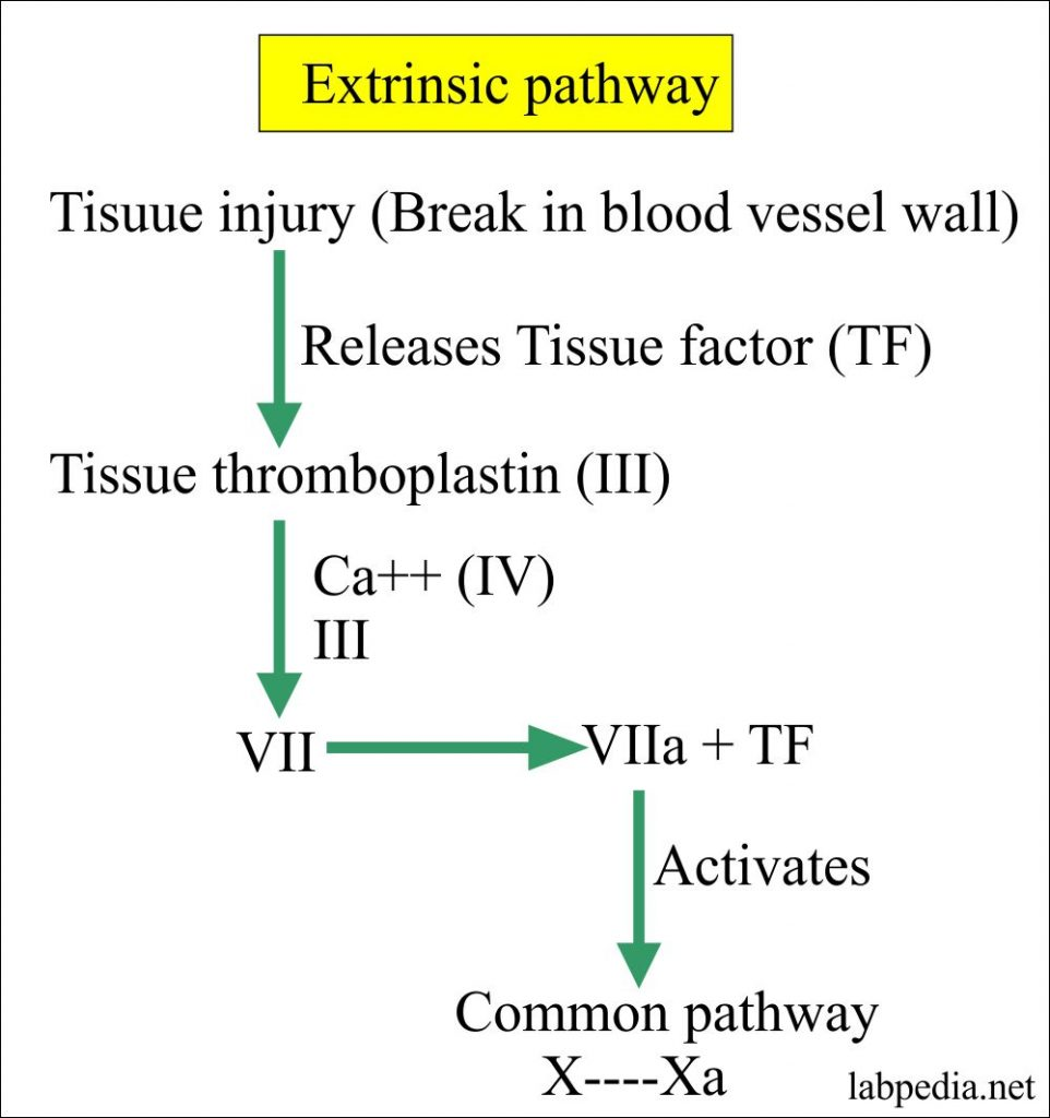 Extrinsic pathway factors