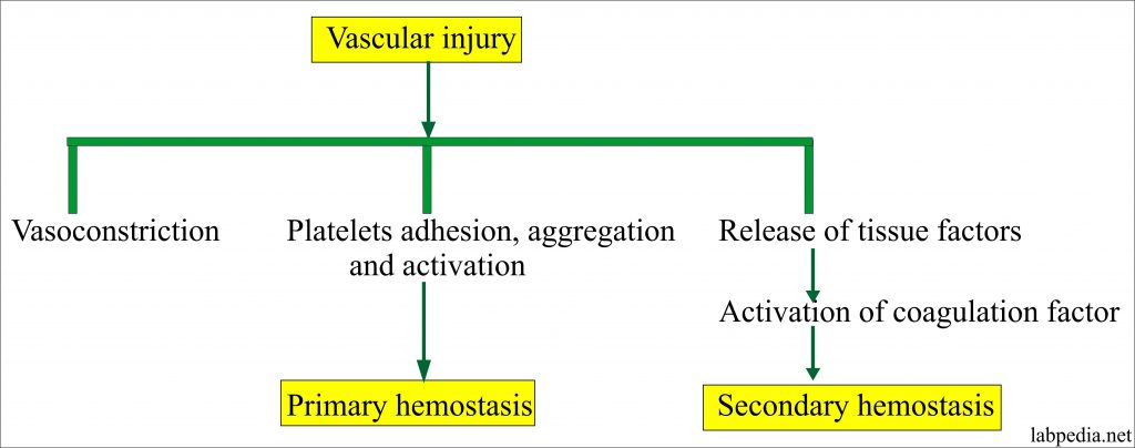 Vascular injury and reposne of blood vessels and platelets