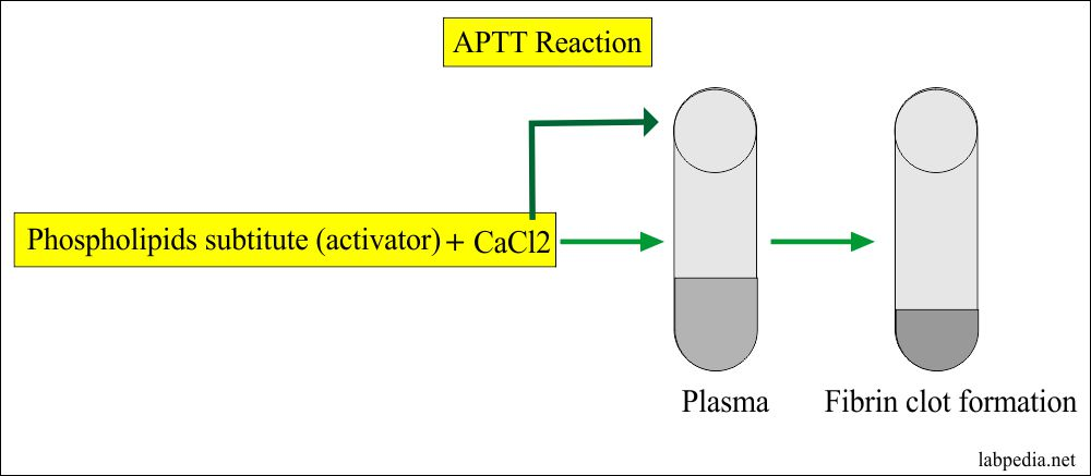 APTT reaction