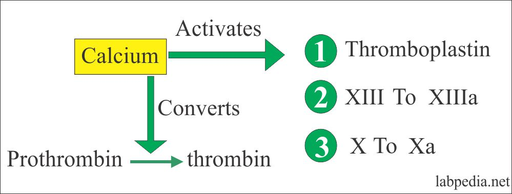 Calcium and its role in coagulation