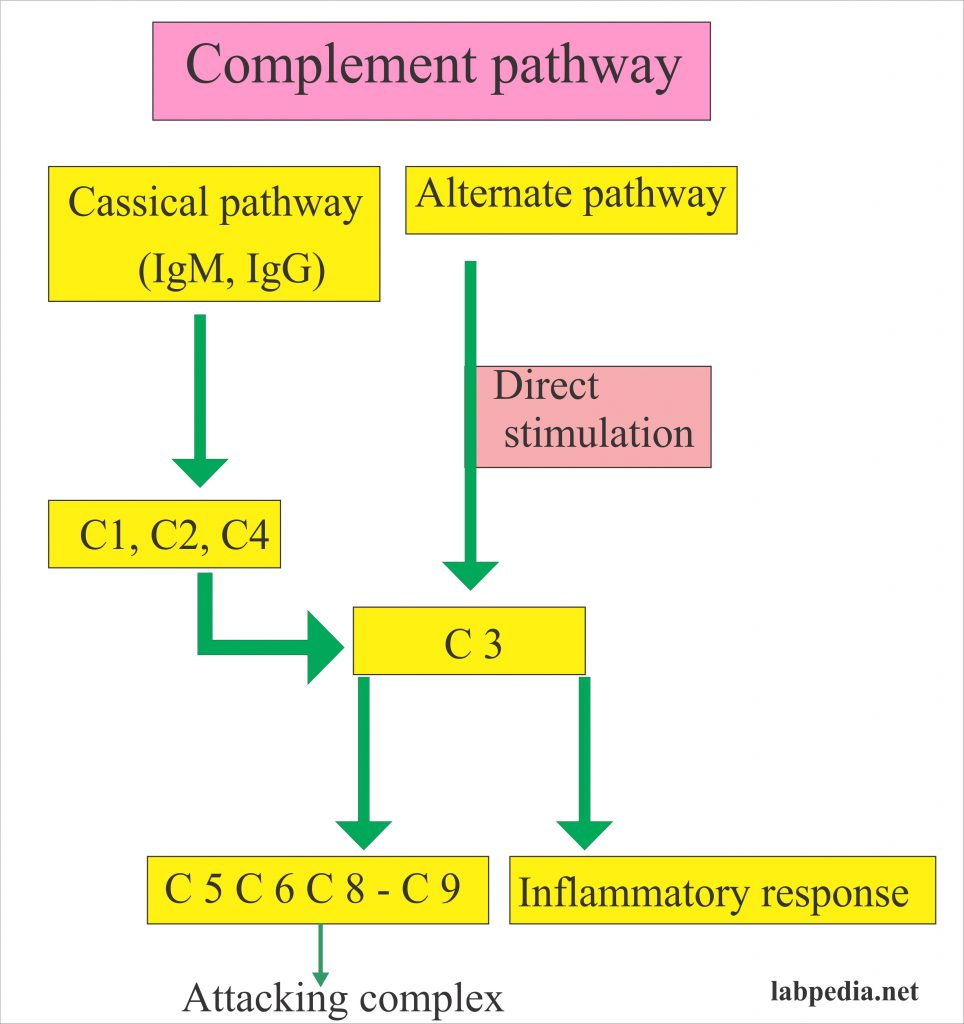 Complement pathways and attacking complex