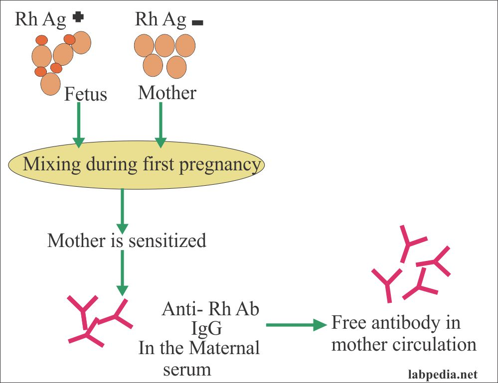 Sensitization of the mother by fetal RBCs