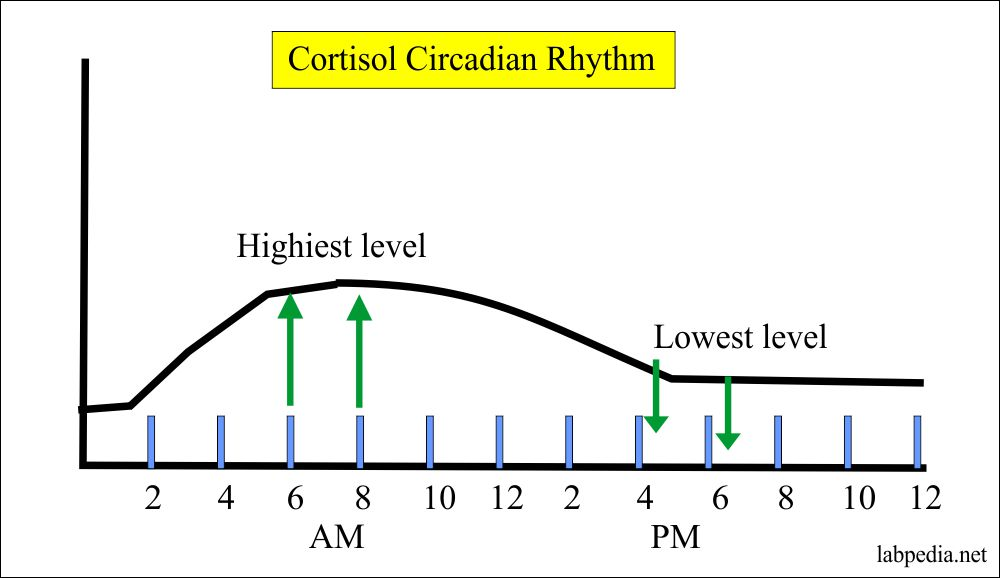 Cortisol hormone variation in the day and night
