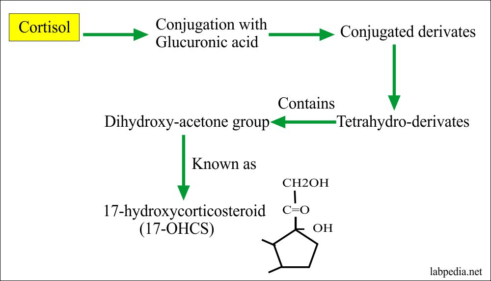 Cortisol level, Hydrocortisone  (AM and PM)