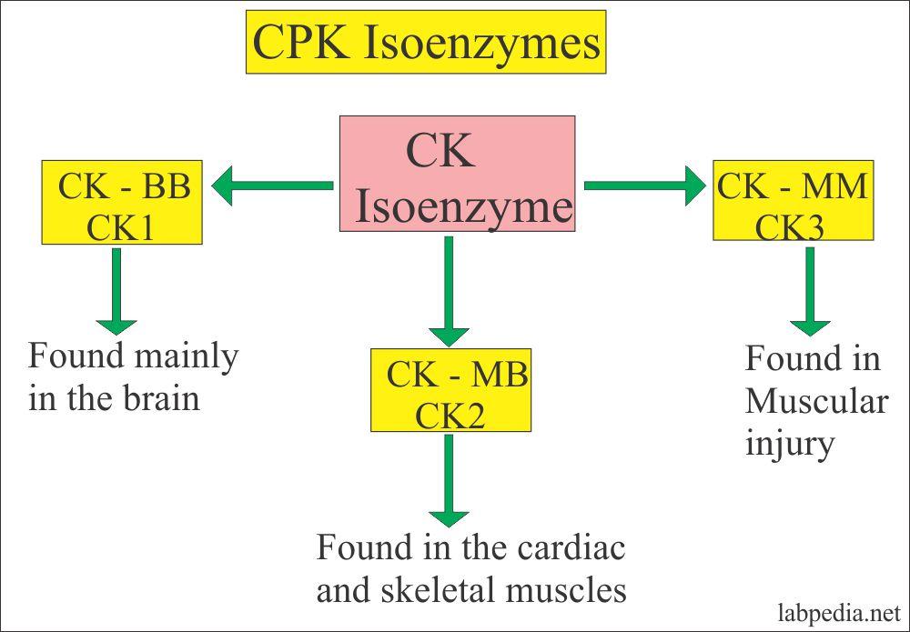 Creatinine phosphokinase isoenzymes