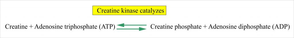 Creatine kinase as a catalytic agent