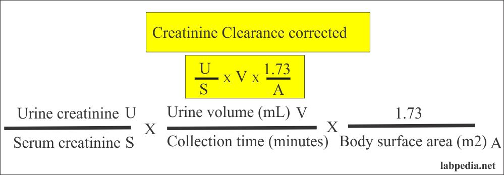 Creatinine clearance correction formula