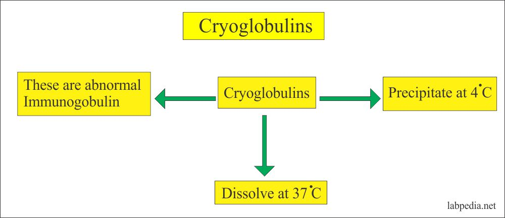 Cryoglobulin