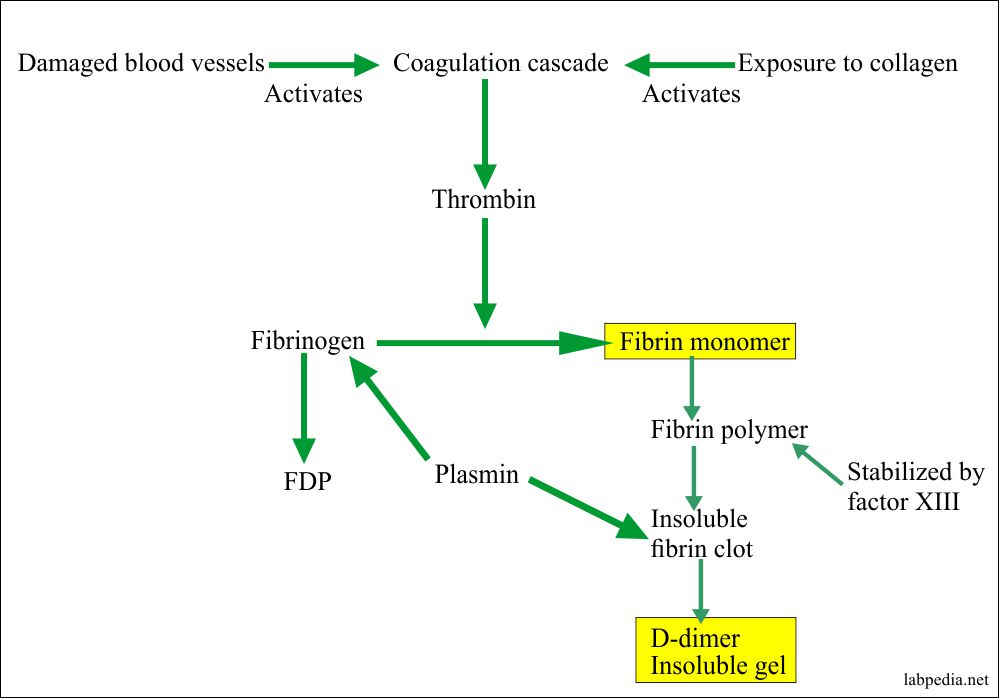 D-dimer production and FDP