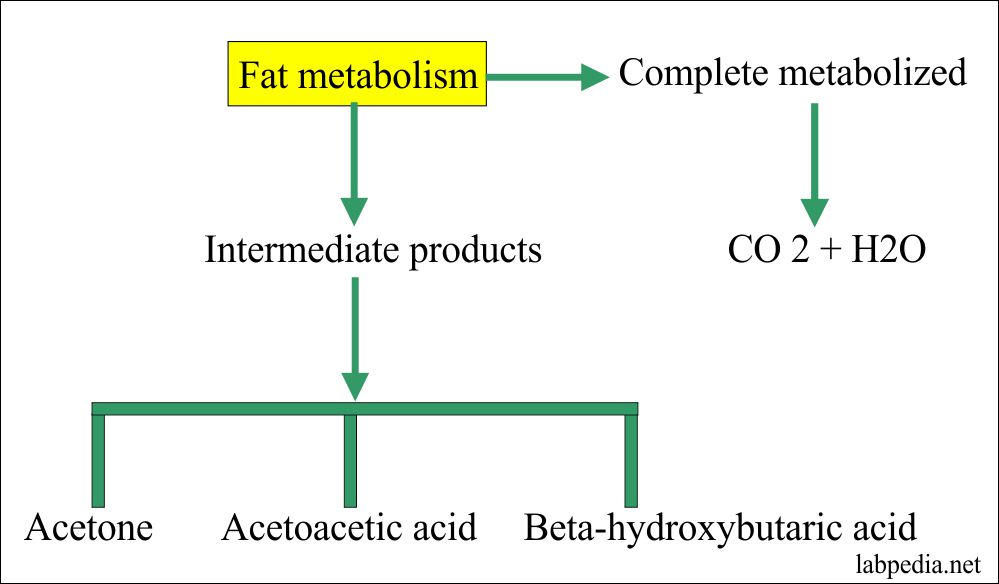 Ketone bodies formation from the fat metabolism